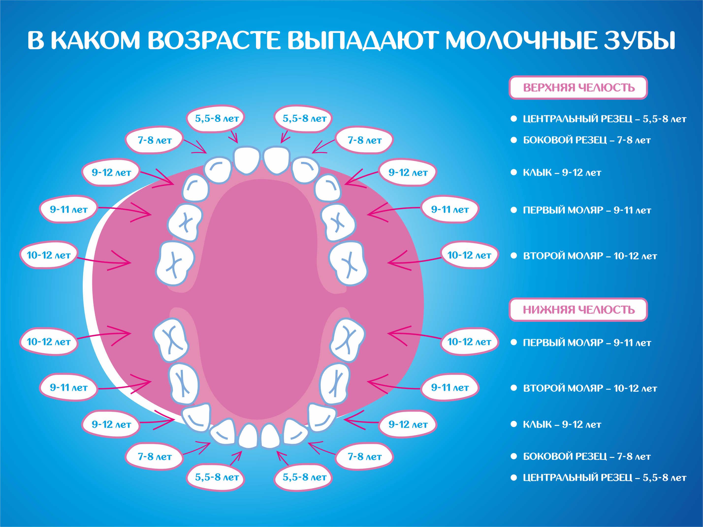 Смена молочных зубов у детей сроки и схема фото9