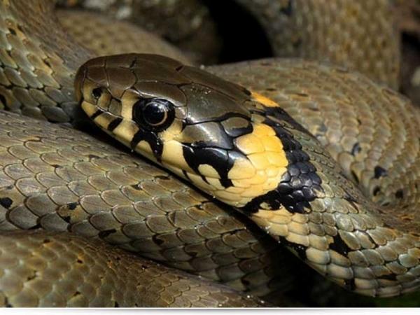 Что делать, если ребенка укусила змея?