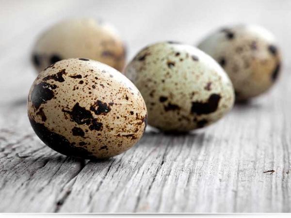 Сколько варить перепелиные яйца для ребенка?
